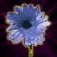 Sweet Violet Aroma
